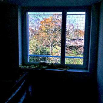 Katzennetze Fenster