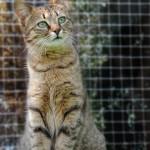 Katzen Balkon Netze